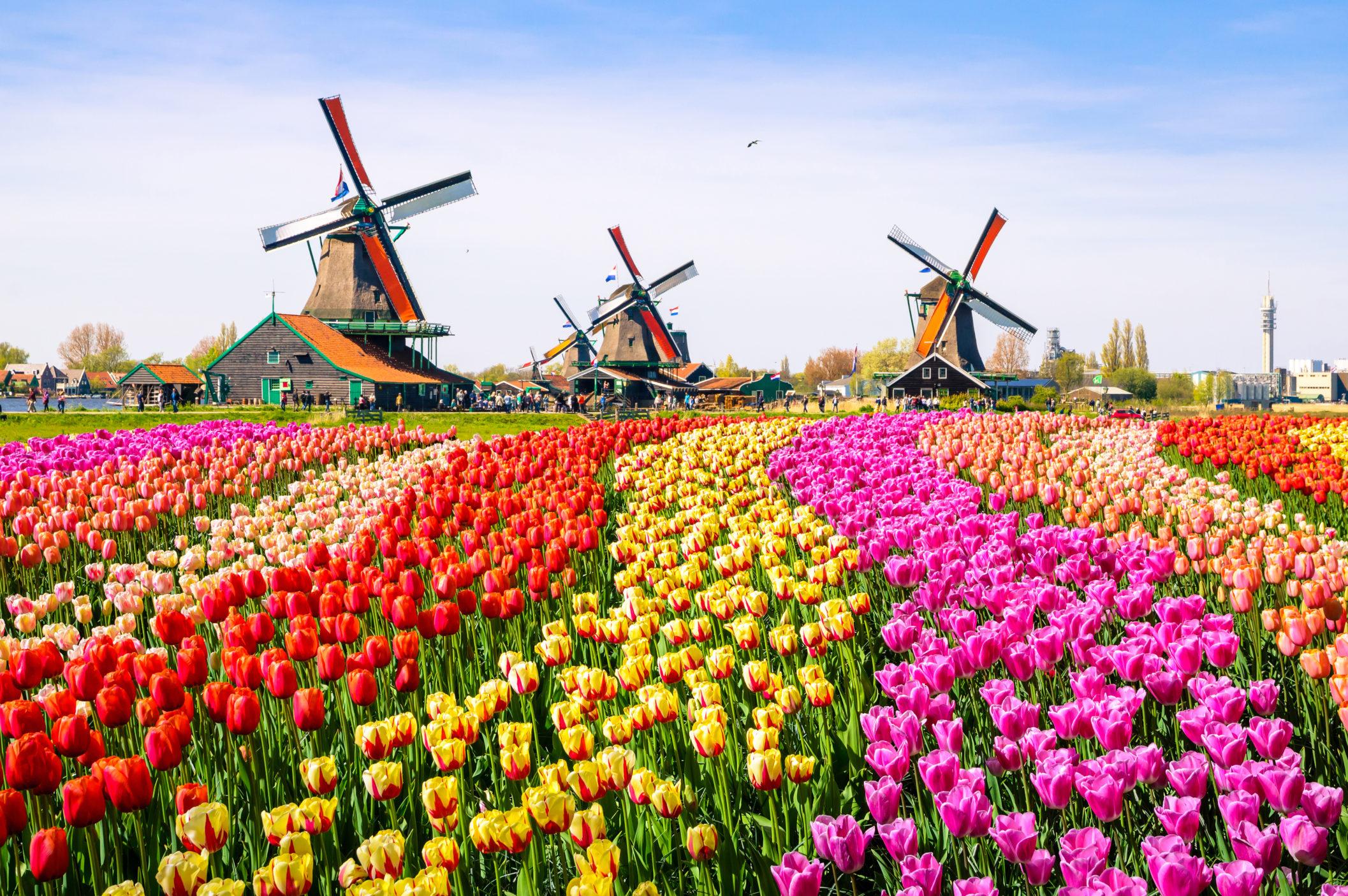 Netherlands [Shutterstock]