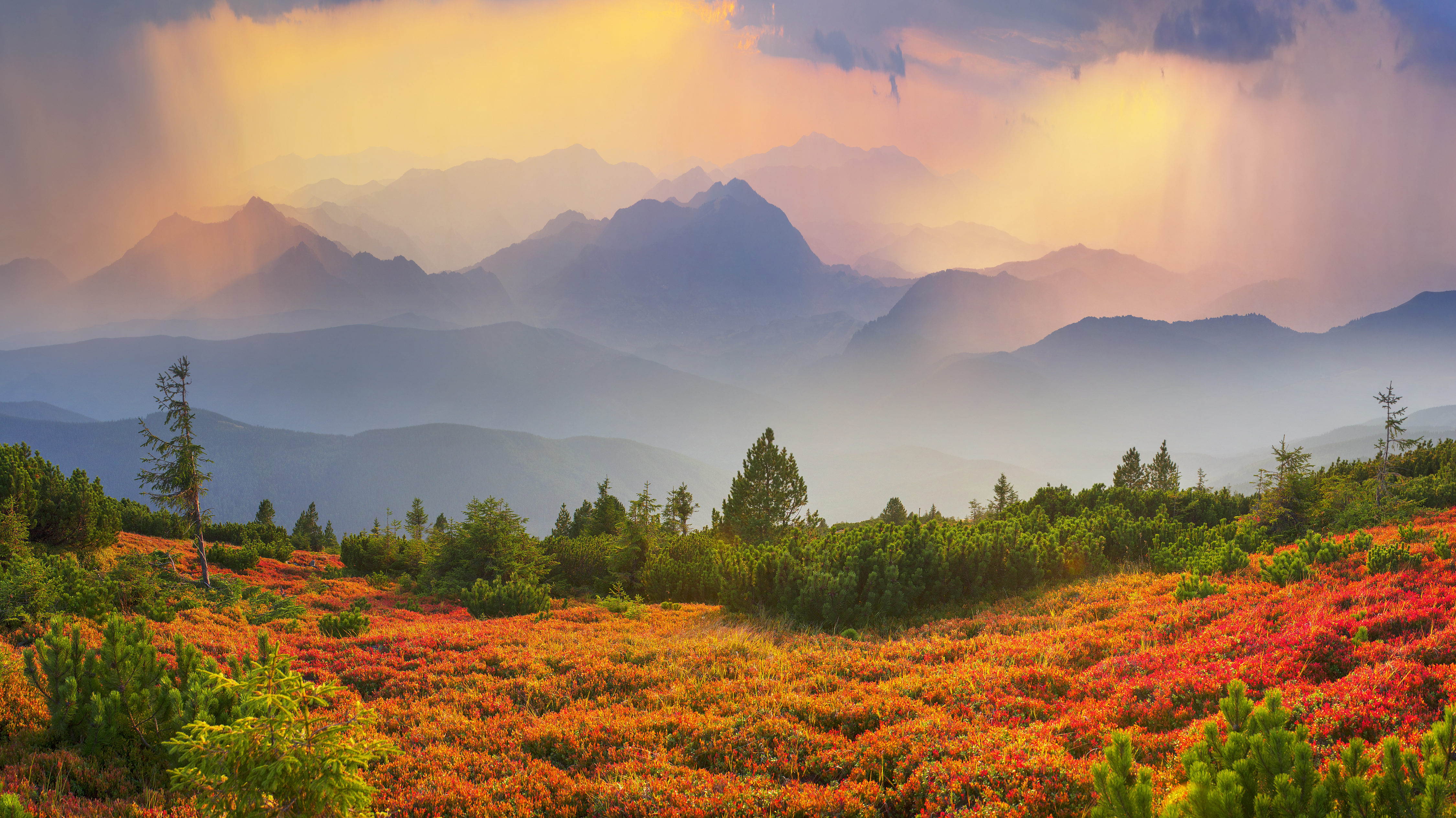 Paints fantastic fall in the Carpathian Mountains. In Gorgany, Mount Igrovets- in September leaves berries and grass shimmering rainbow colors on the background of wild peaks Osmoloda and Old Guty - Image