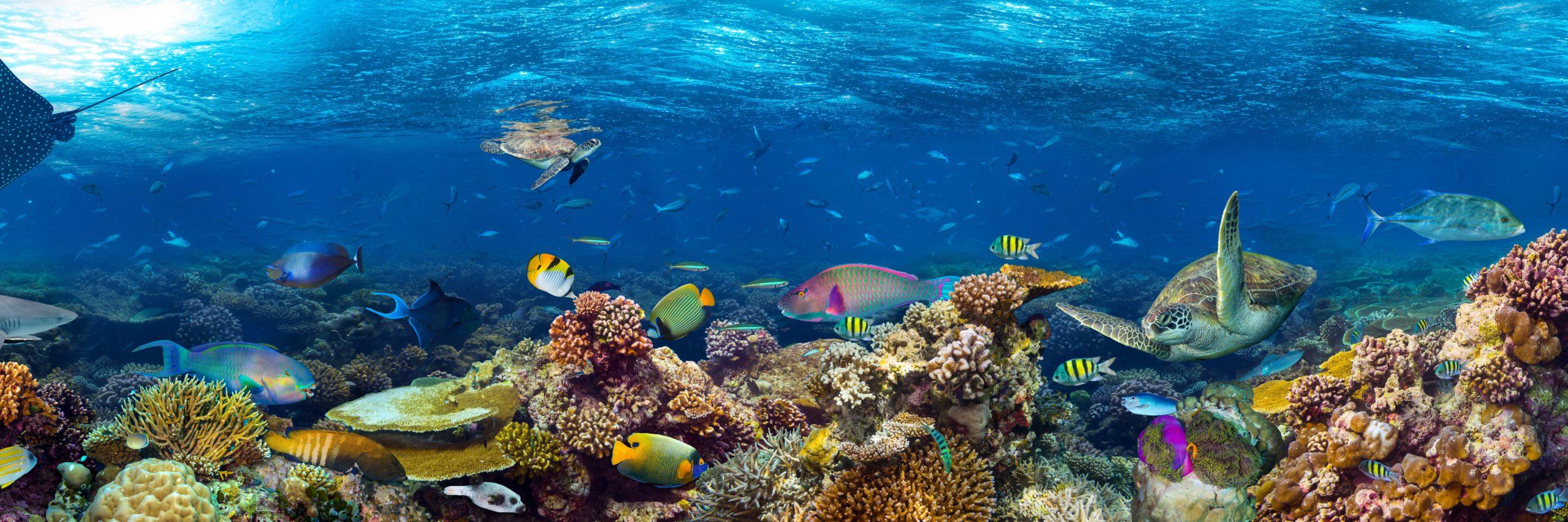 Oceans & The Arctic Shutterstock 578903659