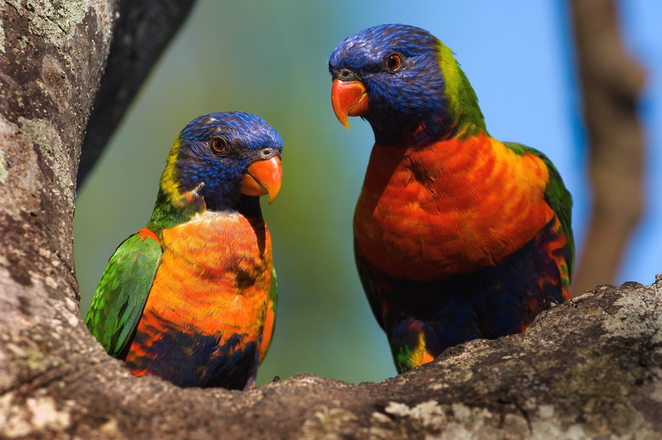 Solomon Islands [Shutterstock]