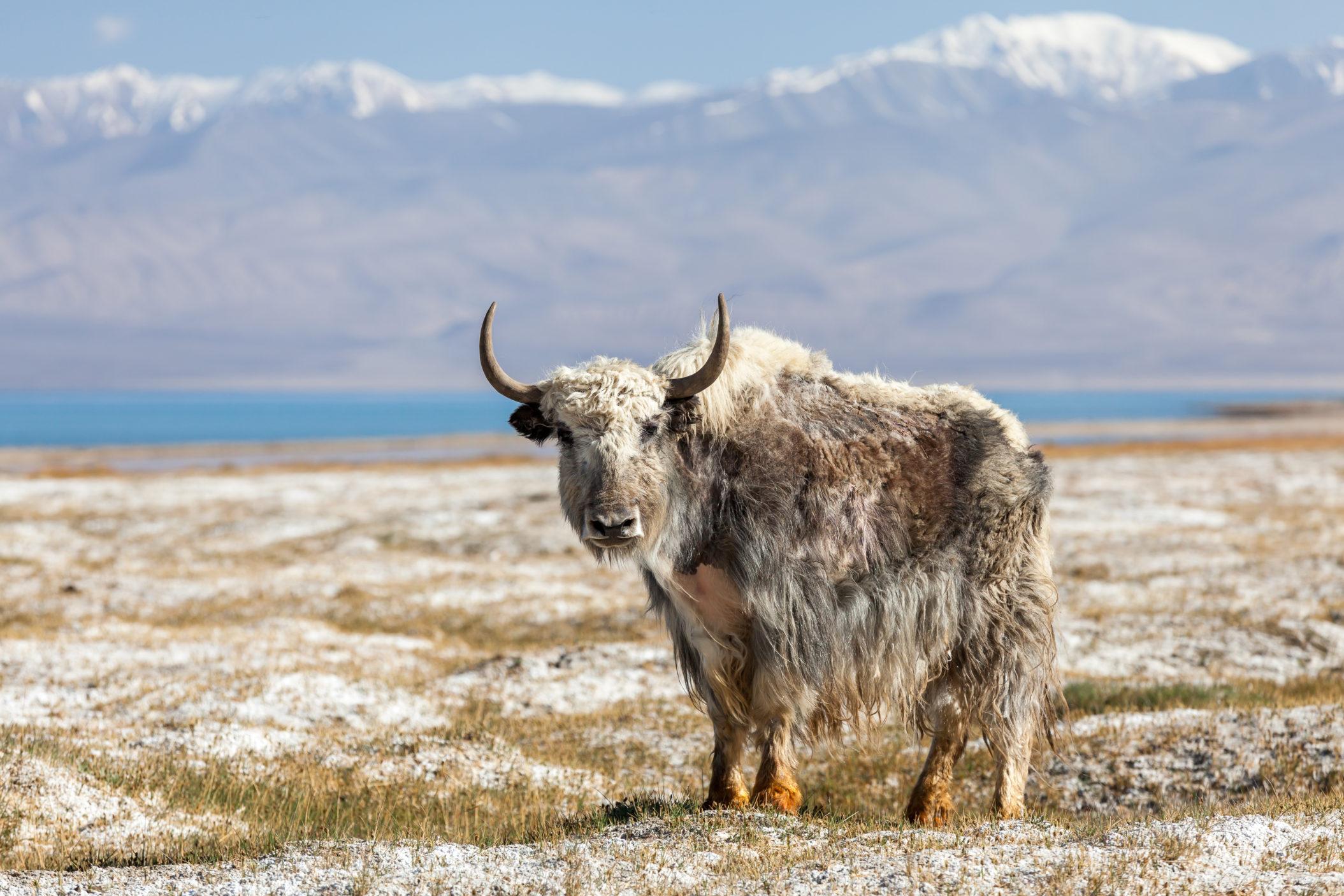 Tajikistan [Shutterstock]