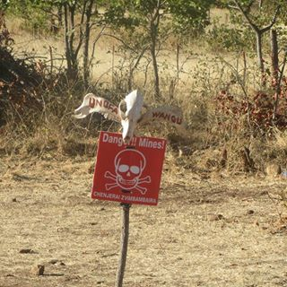 """A cattle skull painted with the Shona words for """"mine"""" and """"you die"""" warn Zimbabweans to keep out of this minefield. Livestock are common victims of landmines, causing severe financial losses for their owners. (Department of State photo)"""